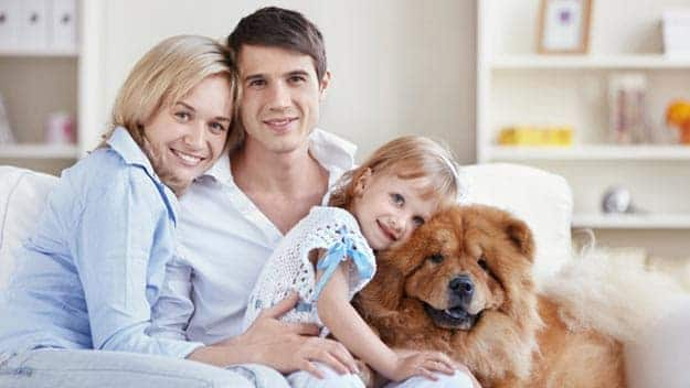 Wills & Trusts dog-young-family Direct Wills Upper Sydenham